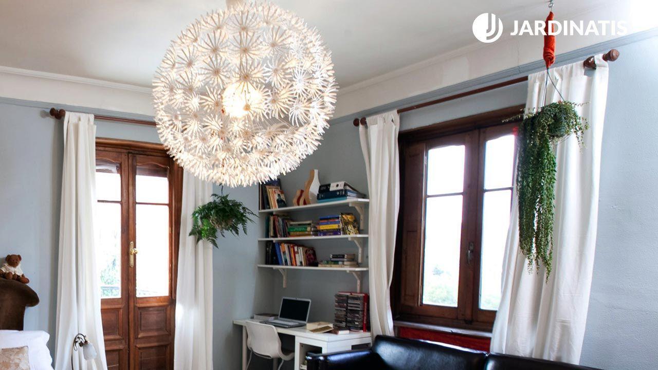Plantas clásicas colgantes para habitaciones