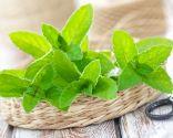 plantas digestión - menta