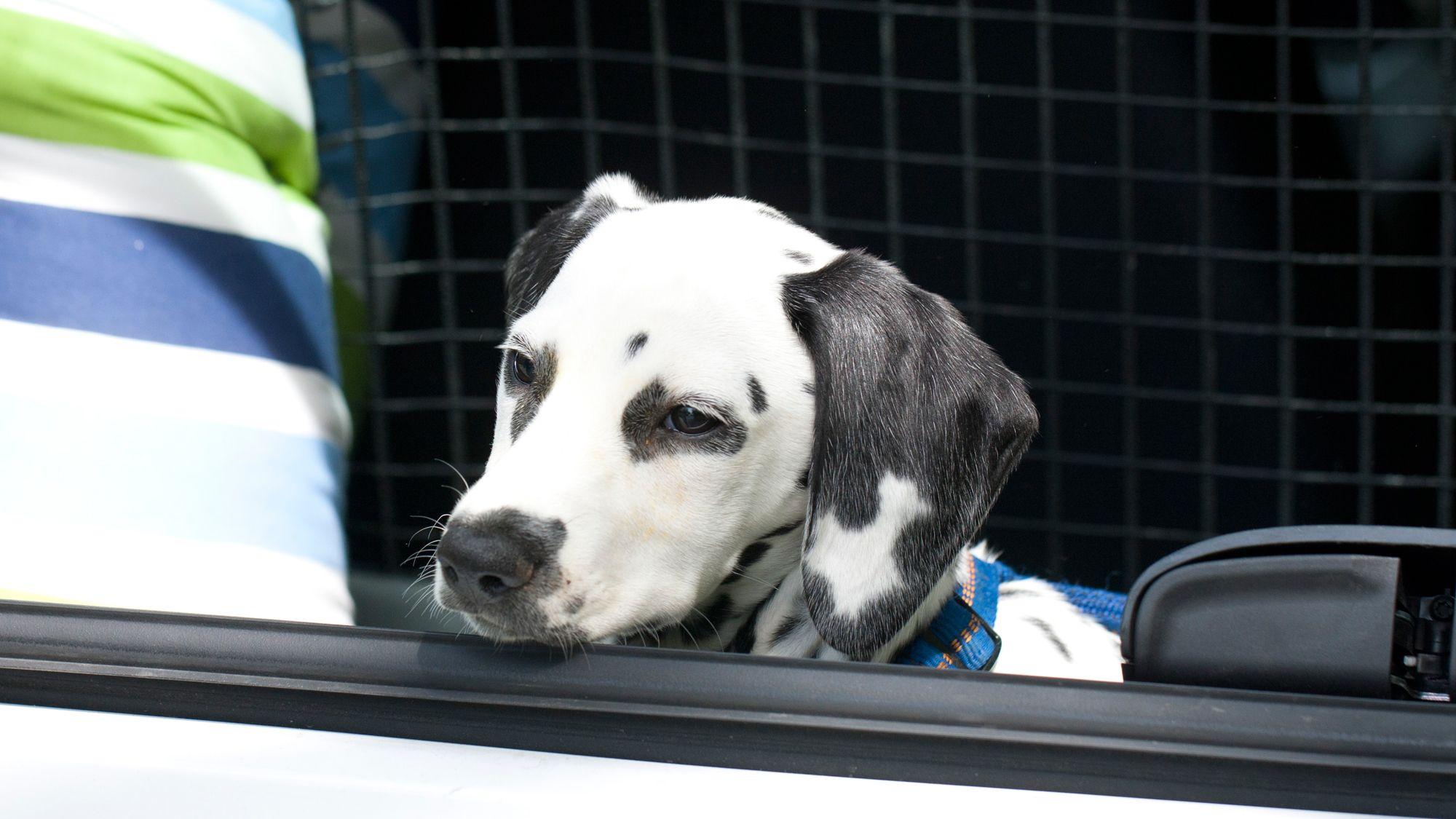 rejilla seguridad coche mascotas
