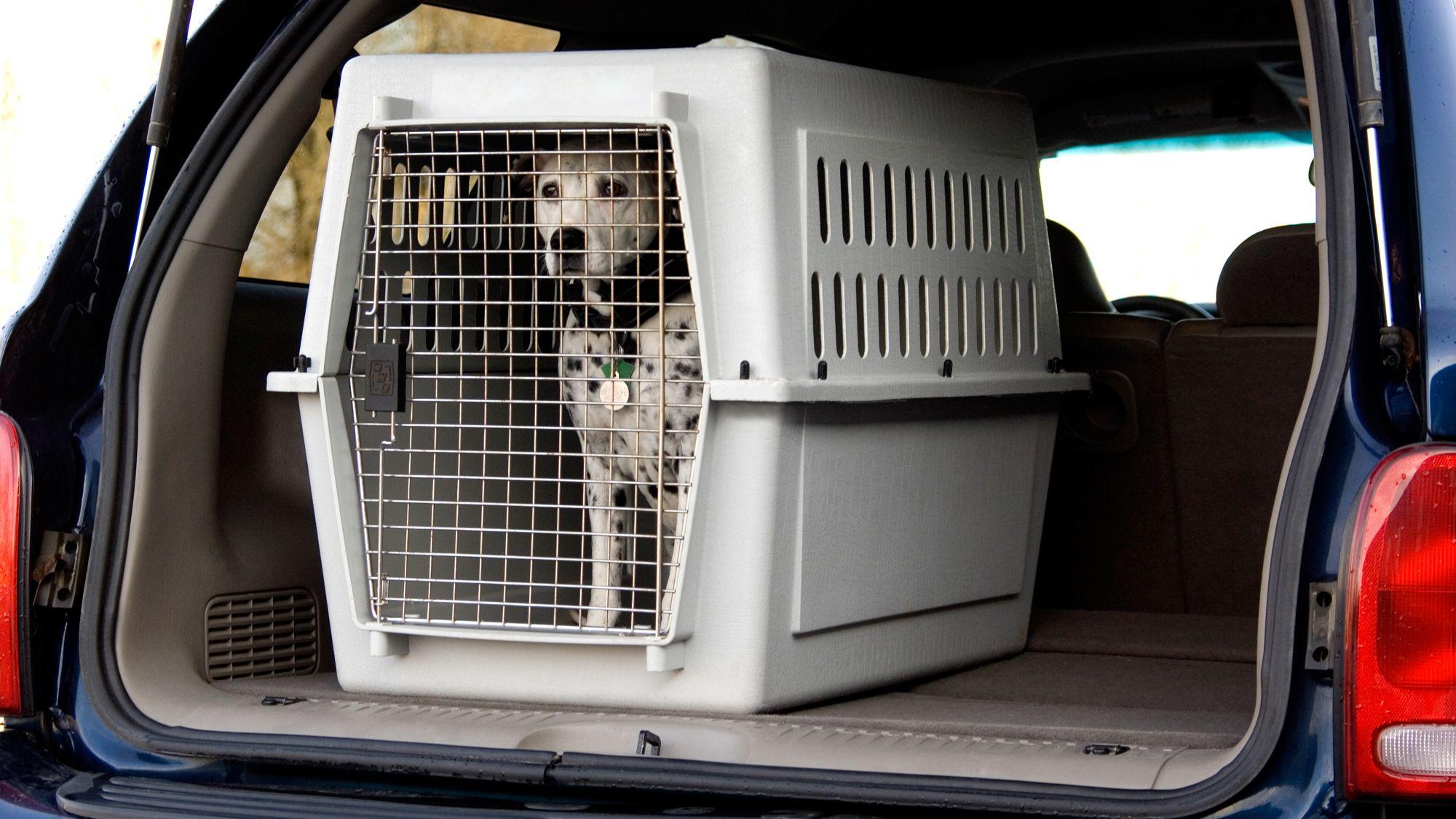 transportín viaje coche mascotas