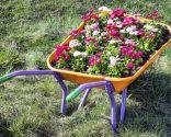 carretillas con plantas exterior