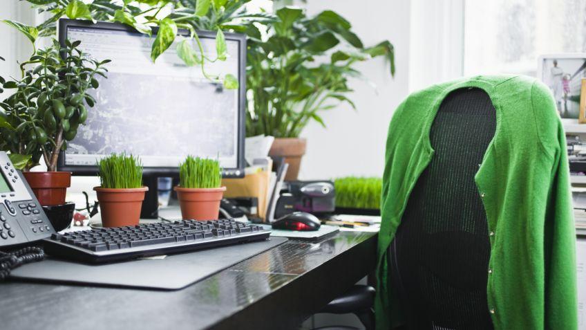 10 plantas perfectas para la oficina hogarmania for Plantas decorativas para oficina
