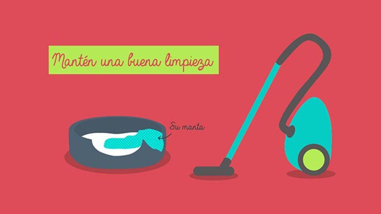 Infografía limpieza casa mascotas