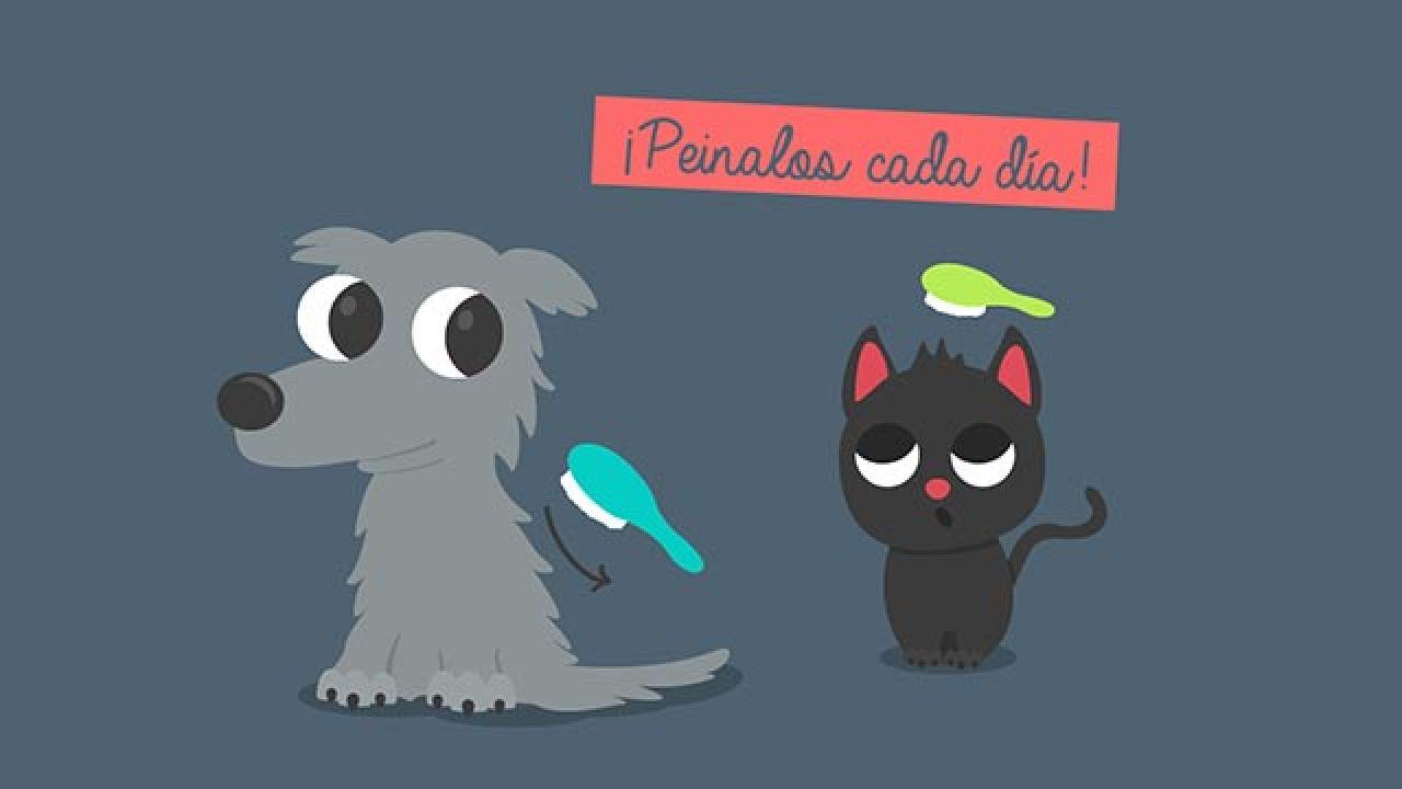 Infografía cepillado diario mascotas