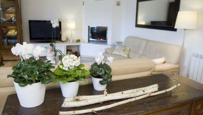 8 flores perfectas para balcones hogarmania for Terrazas decoradas con plantas