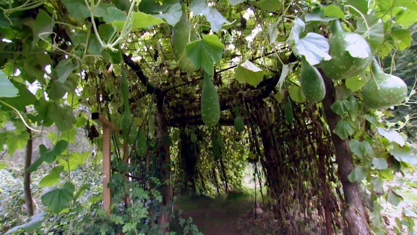 Arco de jardn con planta de calabaza Decogarden