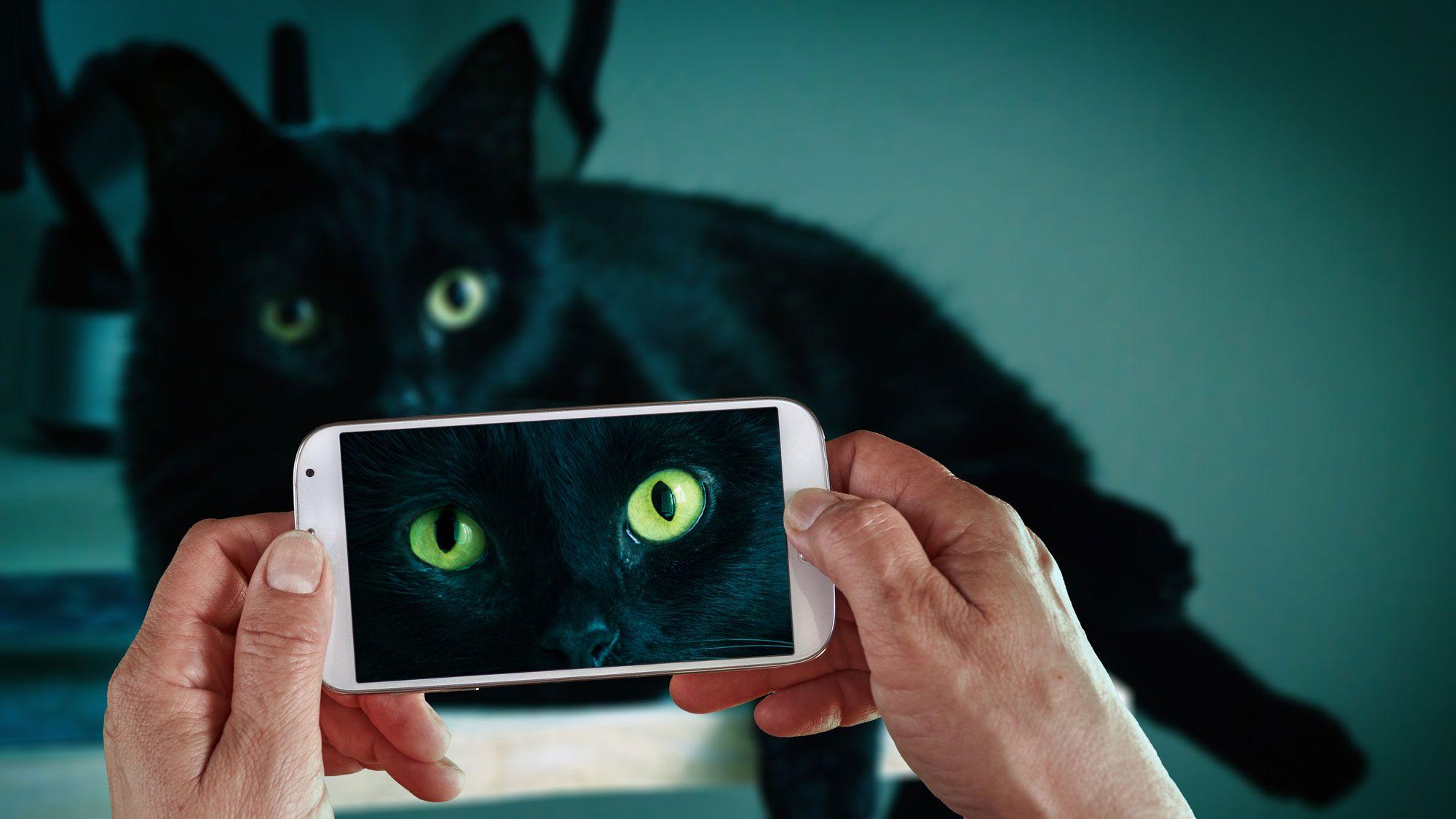 gatos negro comunidad