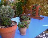 Hacer un mini-jardín de plantas crasas