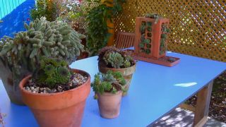 mini jardín de plantas crasas