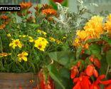 Crear composiciones florales con cajas de fruta - Paso 10