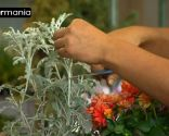 Crear composiciones florales con cajas de fruta - Paso 3