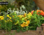 Crear composiciones florales con cajas de fruta - Paso 4