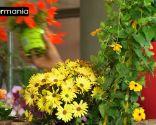 Crear composiciones florales con cajas de fruta - Paso 6