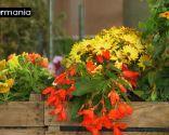 Crear composiciones florales con cajas de fruta - Paso 7