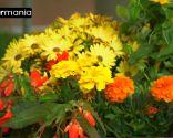 Crear composiciones florales con cajas de fruta - Paso 8