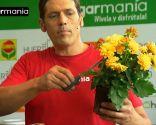 Crear composiciones florales con cajas de fruta - Paso 9