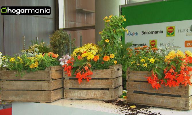Crear composiciones florales con cajas de fruta