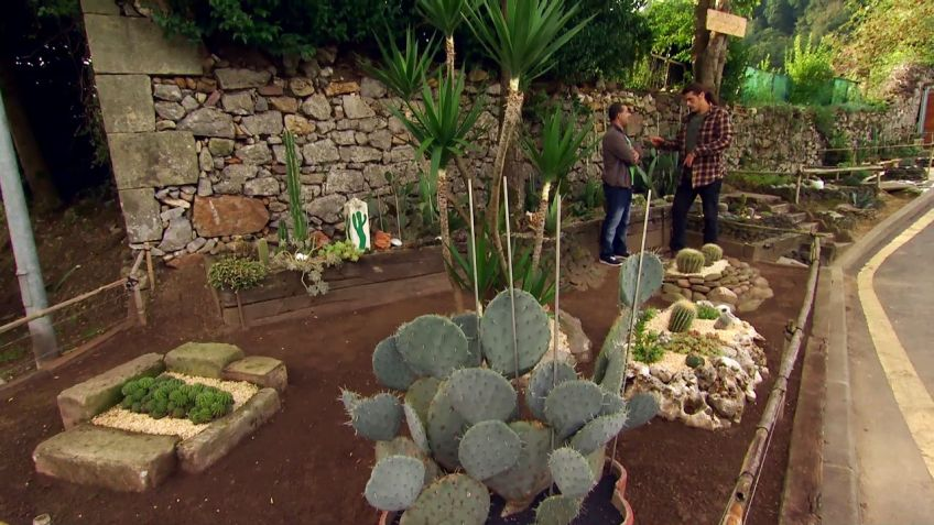 Visita al jardn de cactus Chihuahua Decogarden
