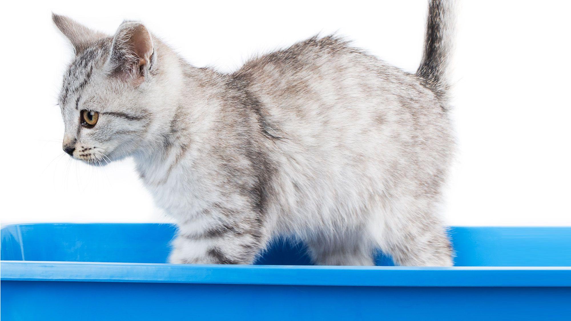 bandeja arena gatos