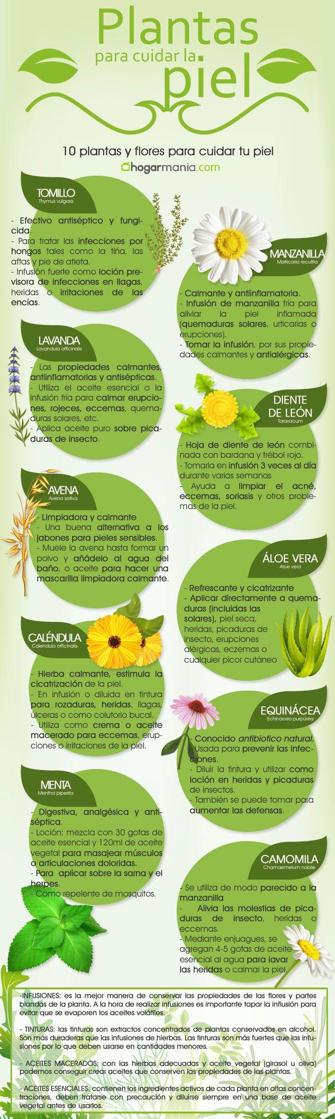 infografia plantas piel