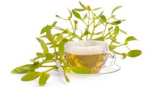 Muérdago, planta medicinal