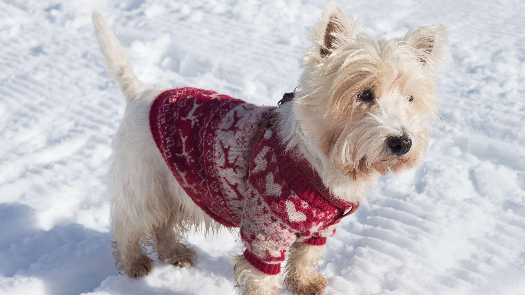 perro nieve ropa