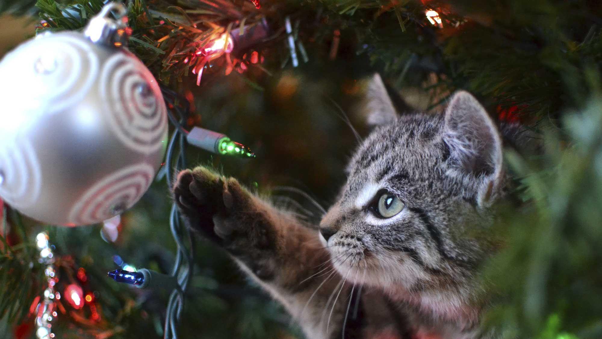 mascotas bolas navidad