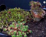 Tejado con cubierta vegetal
