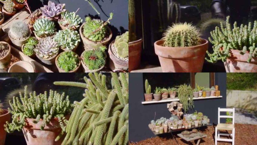 Decorar rincn con cactus y plantas crasas Decogarden