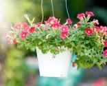 plantas decorar jardin