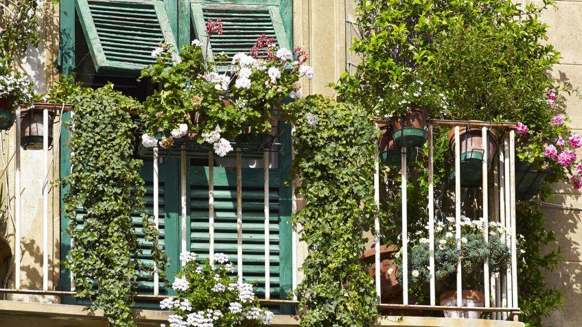 Qu plantar en un balc n orientado al sur hogarmania - Plantas de balcon resistentes al sol ...