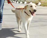 proteger mascota calor - paseos