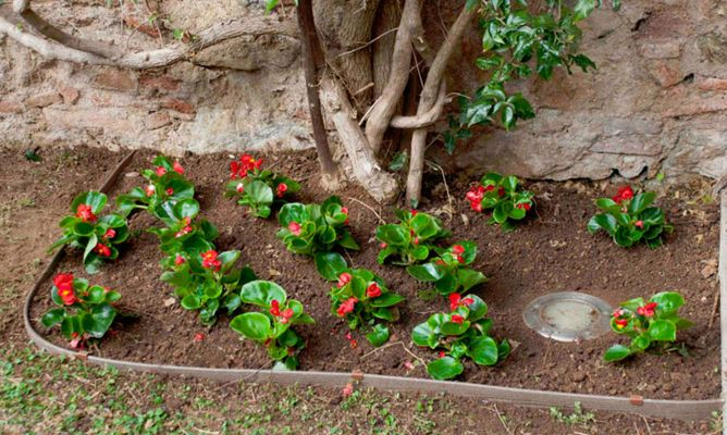 Dise ar jardines y parterres con borduras hogarmania - Hogarmania jardineria ...