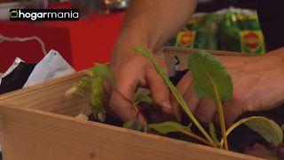 Cómo crear un huerto urbano sin jardinera