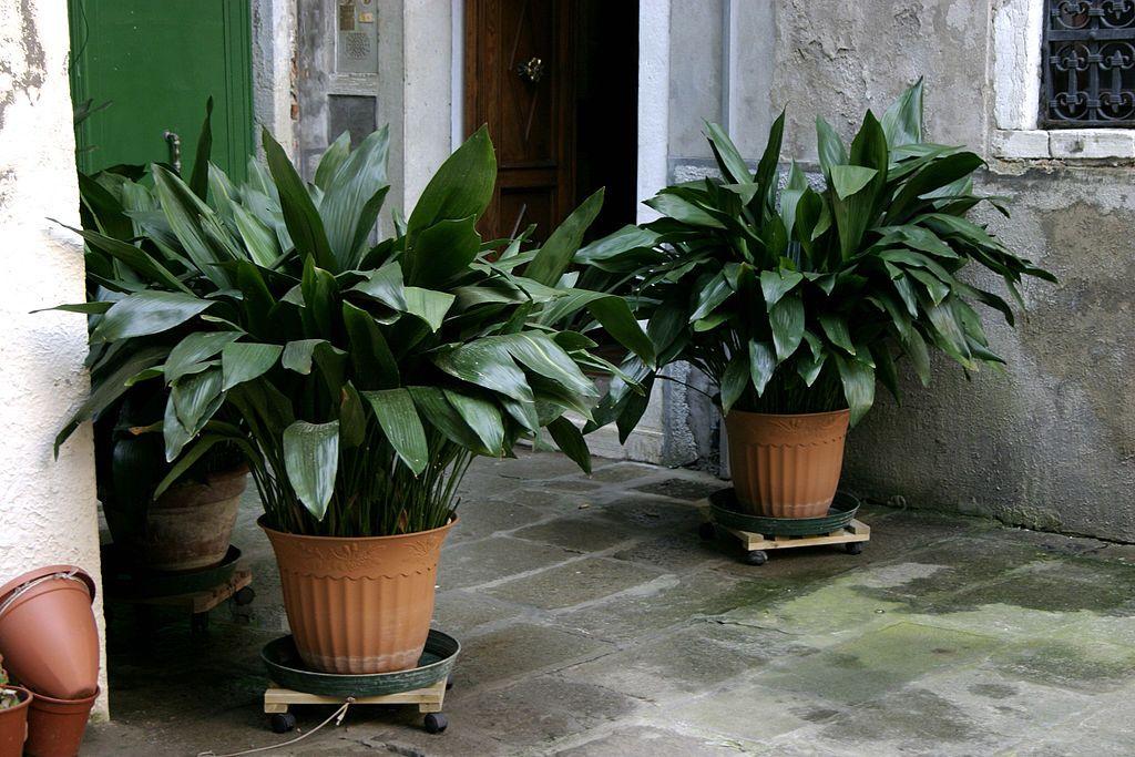 Plantas perfectas para patios y porches