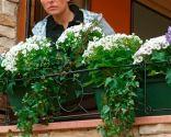 Sujeción para jardineras en ventana