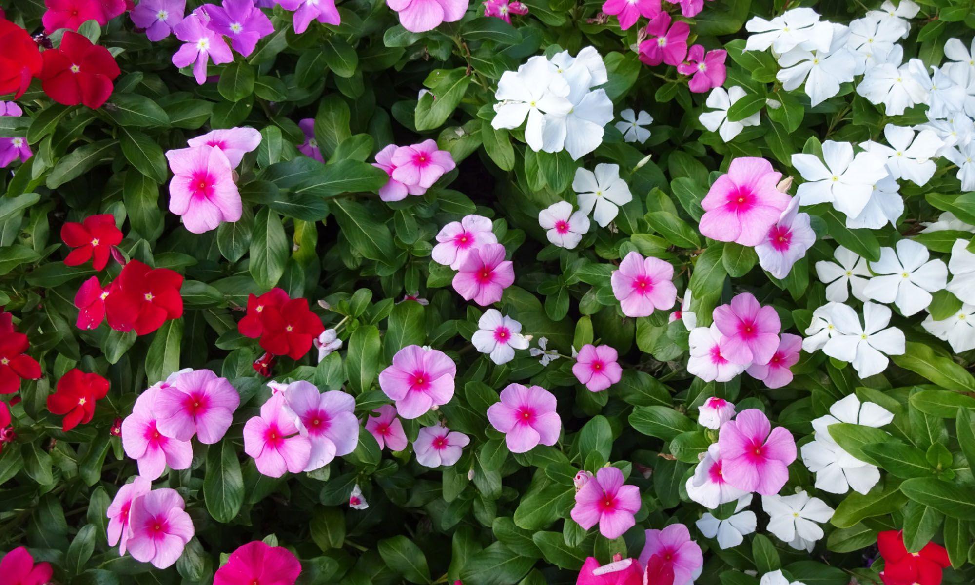 8 flores perfectas para balcones