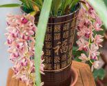 orquídea colgante