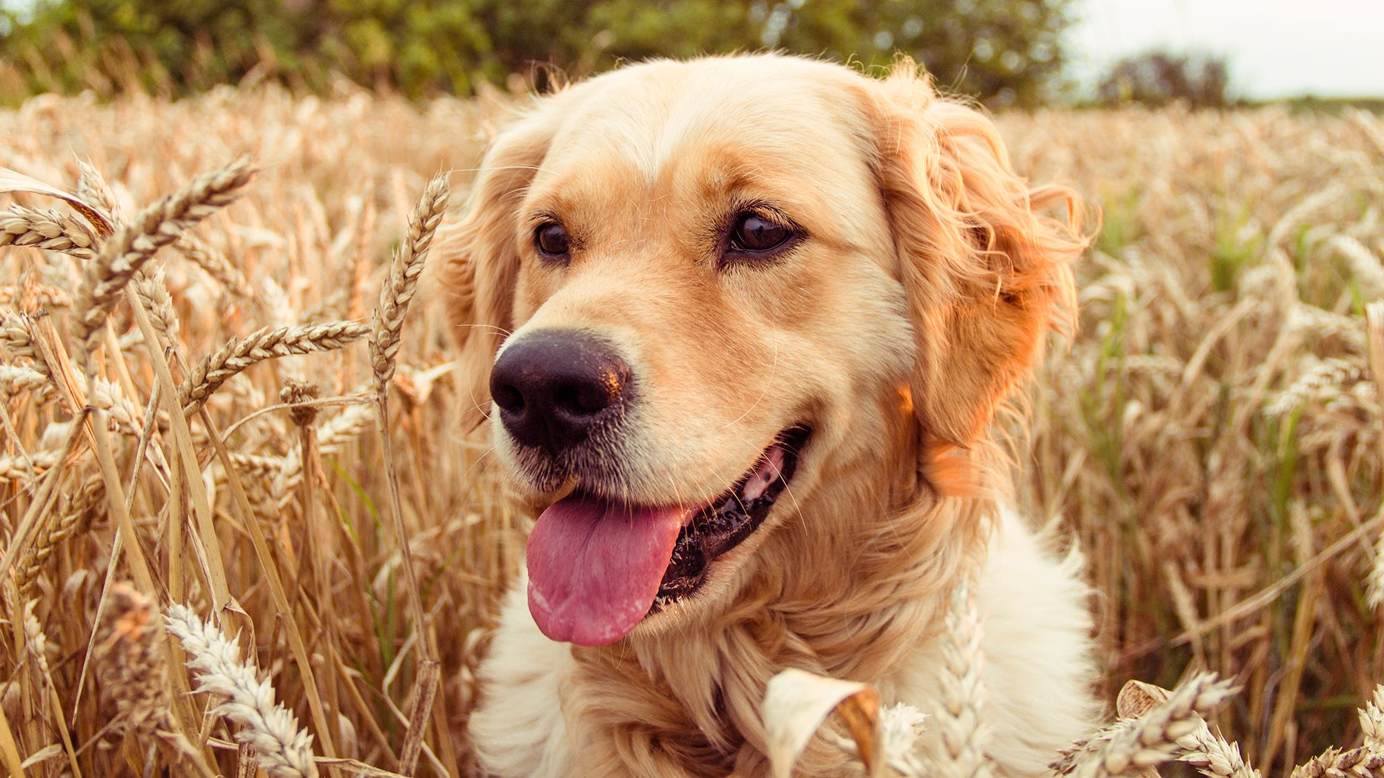 cuidados mascotas espigas