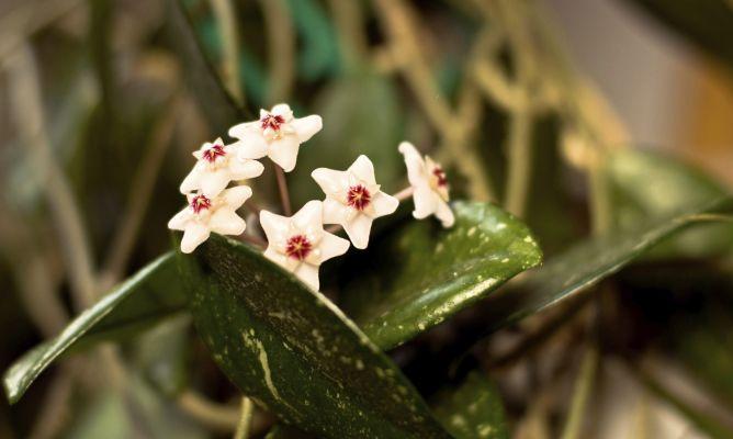 Casas Perfumadas Con Plantas Hogarmania