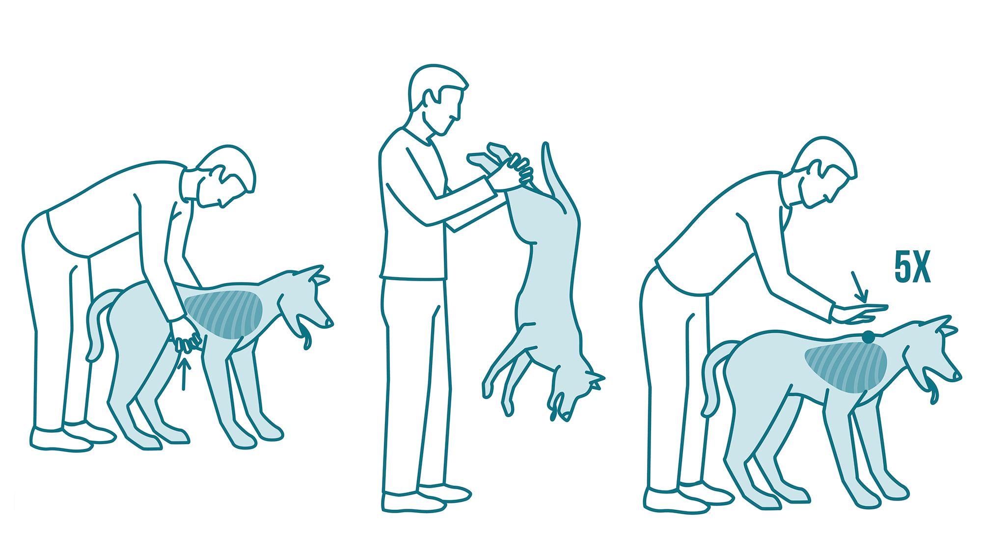 Cómo hacer la maniobra Heimlich a un perro