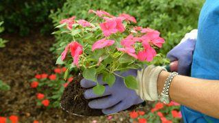 Cuándo podemos trasplantar las plantas recién compradas
