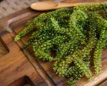 Caviar verde o Uvas de mar