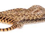 Animales serpientes - Serpientes