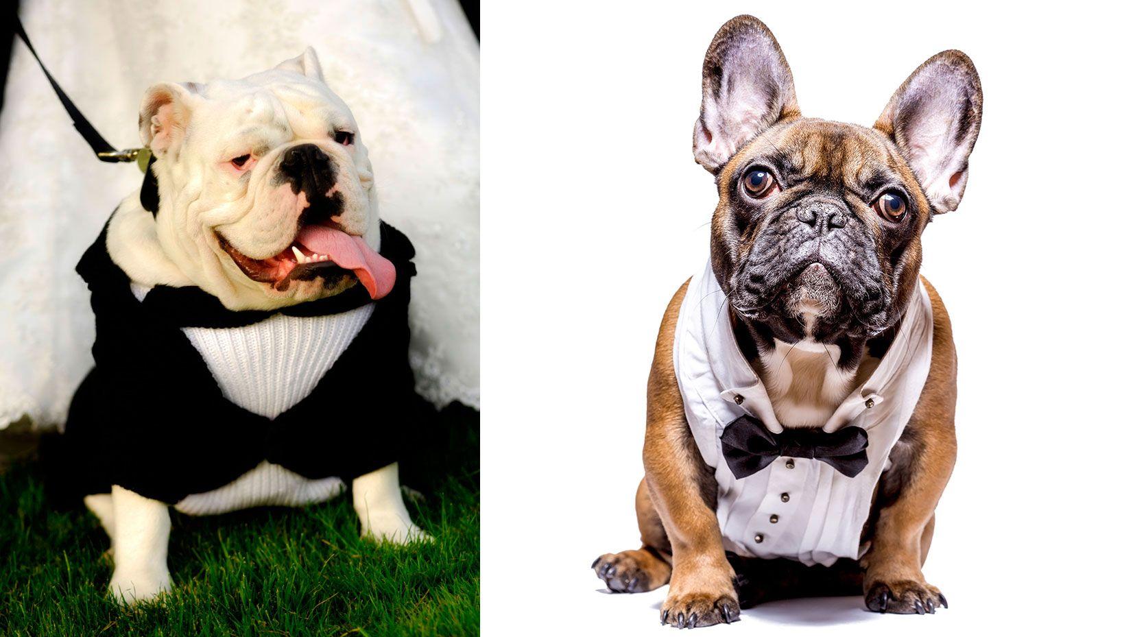 perros fotos traje boda