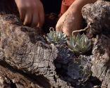 Escultura de jardín con suculentas