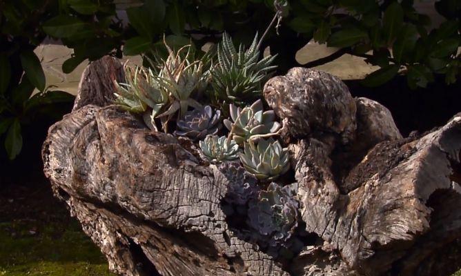 Escultura de jard n con suculentas bricoman a for Bricomania jardin