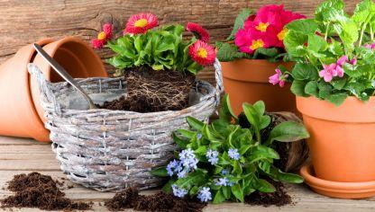 Plantar bulbos de primavera en oto o bricoman a - Cactus en macetas pequenas ...