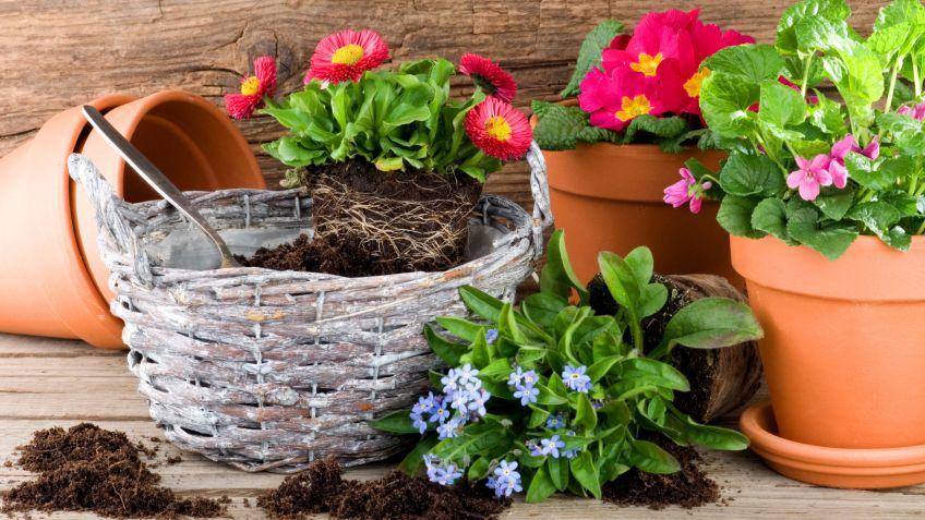 plantar plantas de primavera en macetas bricomana - Bricomania Jardineria