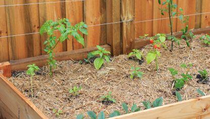 plantar hierbas arom ticas en mesas de cultivo decogarden
